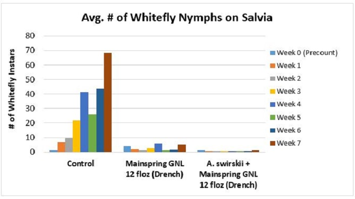 Mainspring GNL + A. swirskii for whitefly control
