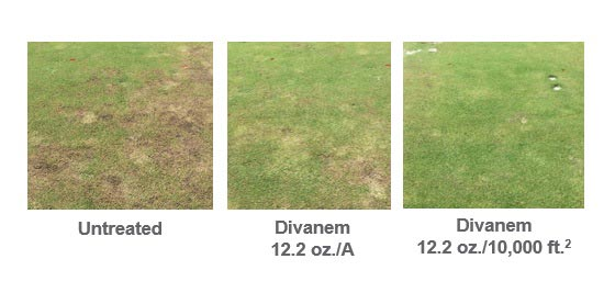 Divanem Spot Treatment Data Chart 1 - FINAL