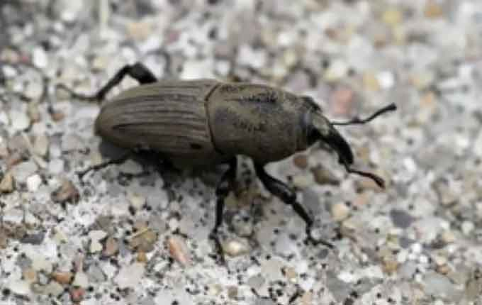 201687020163722493_s-turf-insects-thumbnail.jpg