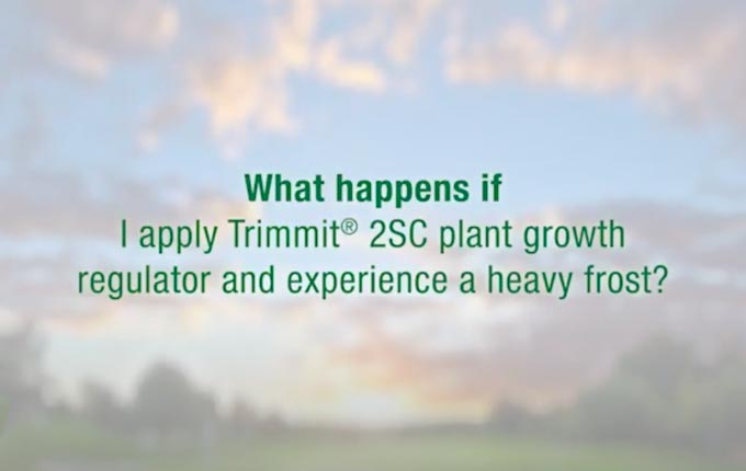 trimmit-frost-application.jpg