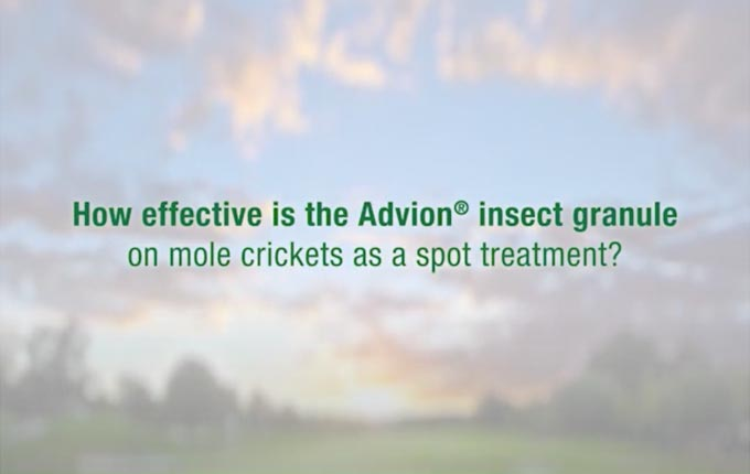 advion-igr-mole-cricket-spot-treatment.jpg
